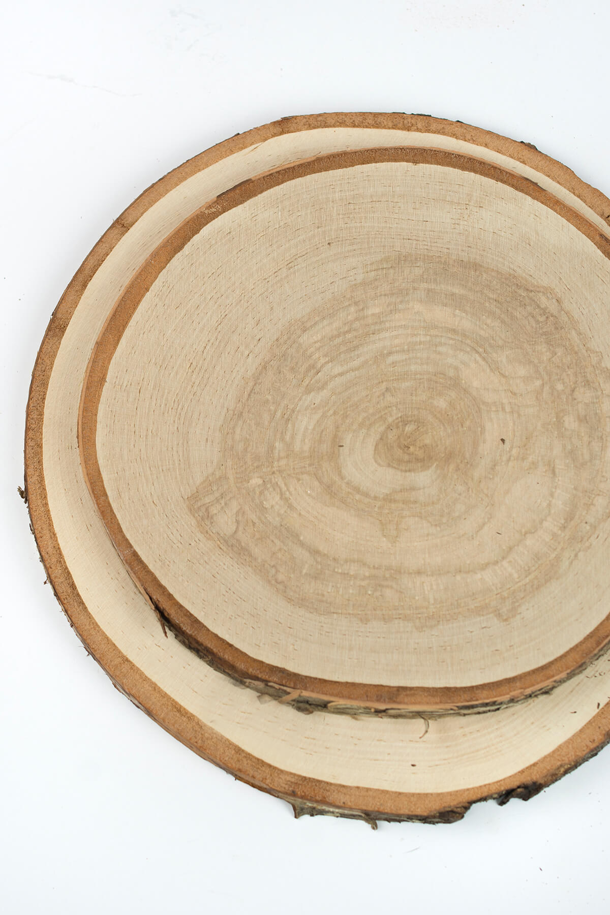 Xl birch round tree slices 9 14in for Large tree trunk slices