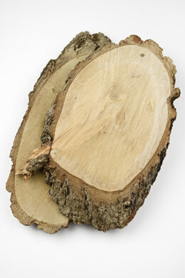 Large Tree Slices 16-20 Inch Pine
