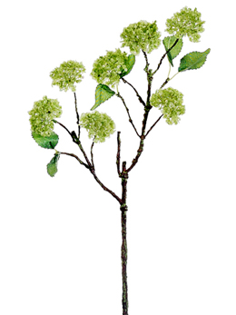 Green Snowball Hydrangea Branch 20in