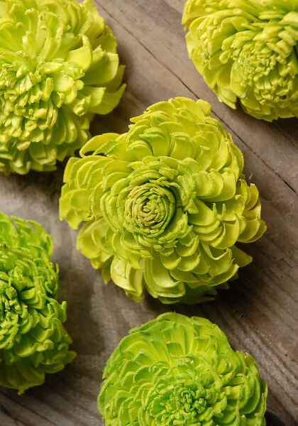 Sola Flowers Lime Green Carnations 12 flowers
