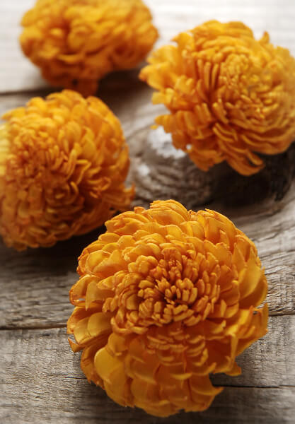 12 Sola Flowers Orange Carnation Flowers