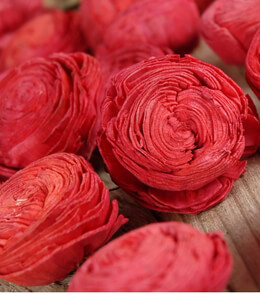 Red Sola Shell Flowers (18 flowers)