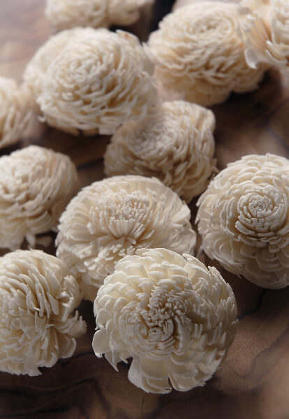 """Sola Flowers  Shell Flowers Mums (12 flowers) 2.25"""""""