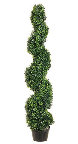 Spiral Boxwood Topiary 4ft SHIPS FREE