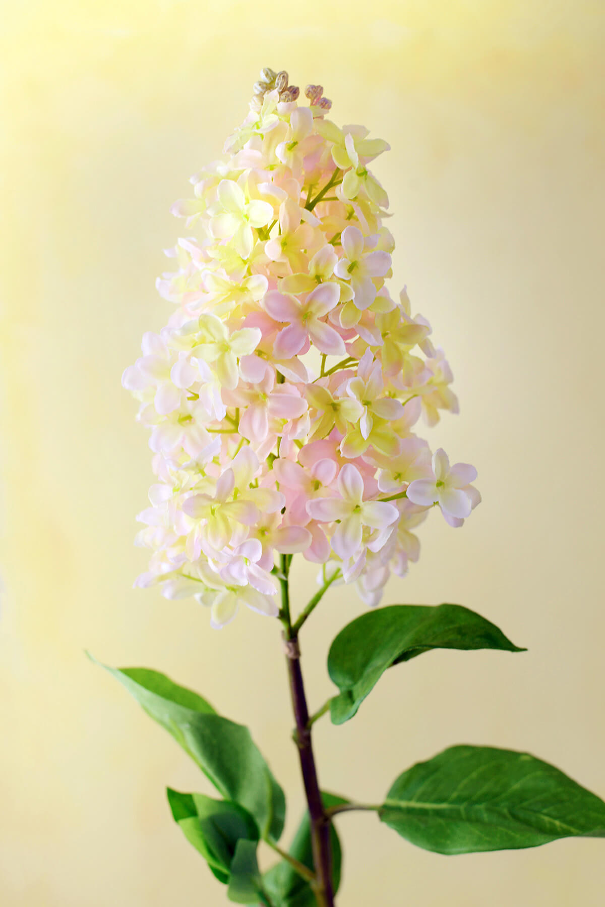 "Blush Pink and Yellow Lilacs 35"""