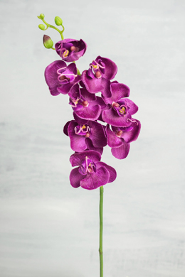 Phalaenopsis Orchid Spray  Orchid