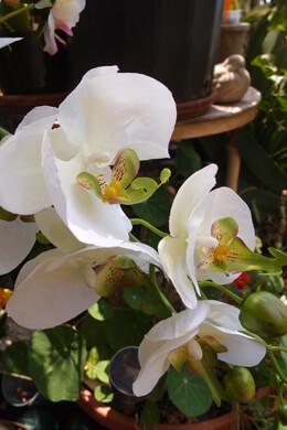 "Phalaenopsis Orchid Spray Cream & Yellow Highlights - 33"" Tall"