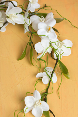 Silk Hanging Phalaenopsis Orchid Flower Spray -White 54""