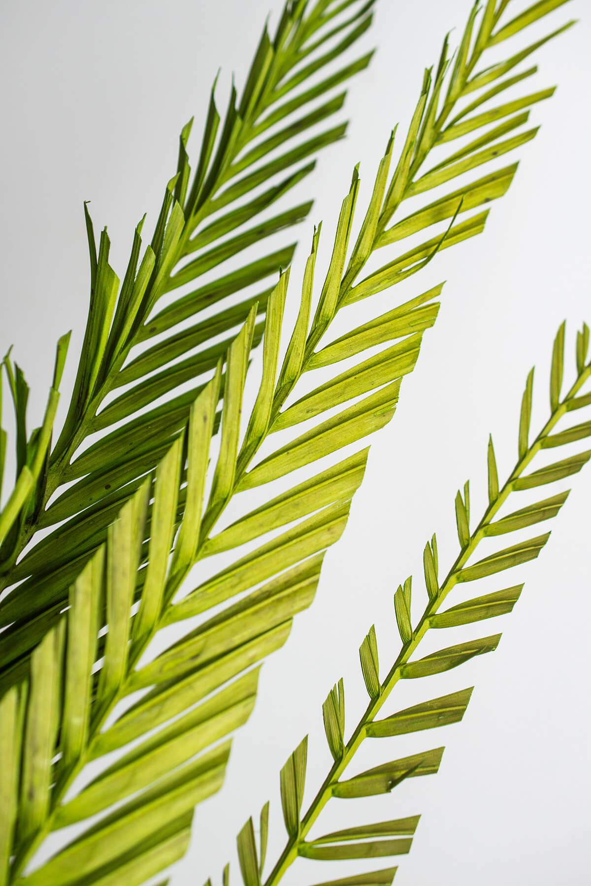 Brazilian Coco Palm Branches 3 Stems 3 5ft Designer Cut