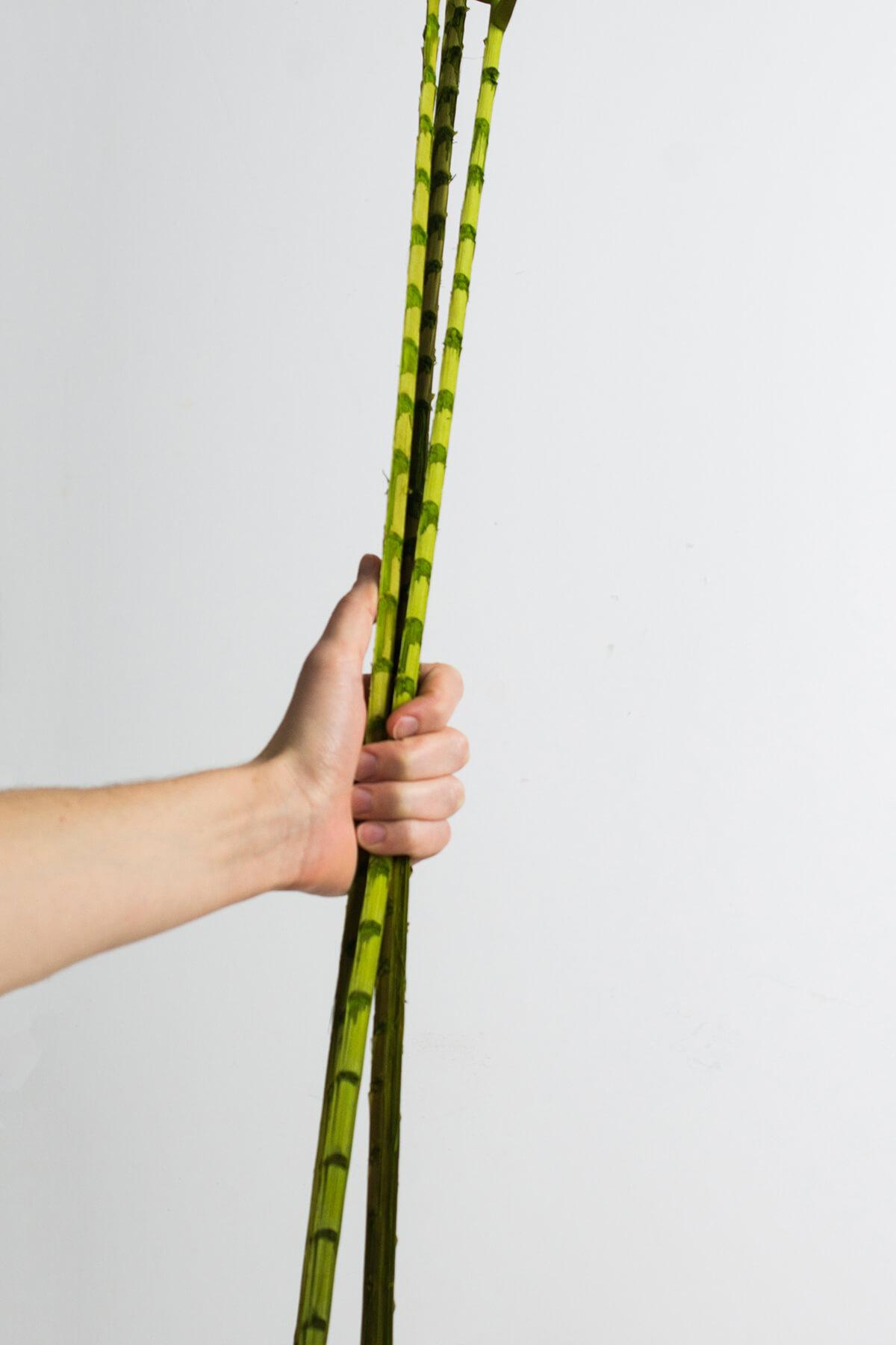 Brazilian Coco Palm Branches, 3 Stems,  3.5FT , Designer Cut