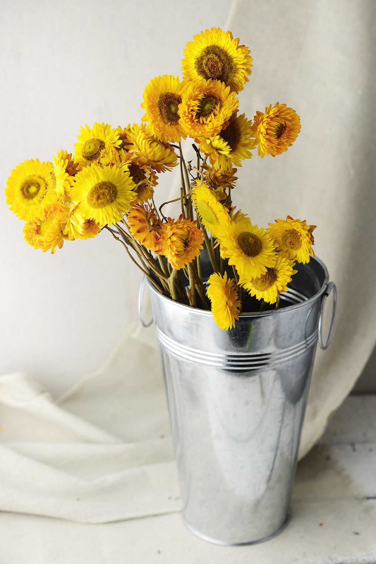 Yellow Dried Strawflowers