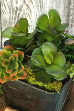 Succulent Pick Kalanchoe 8in