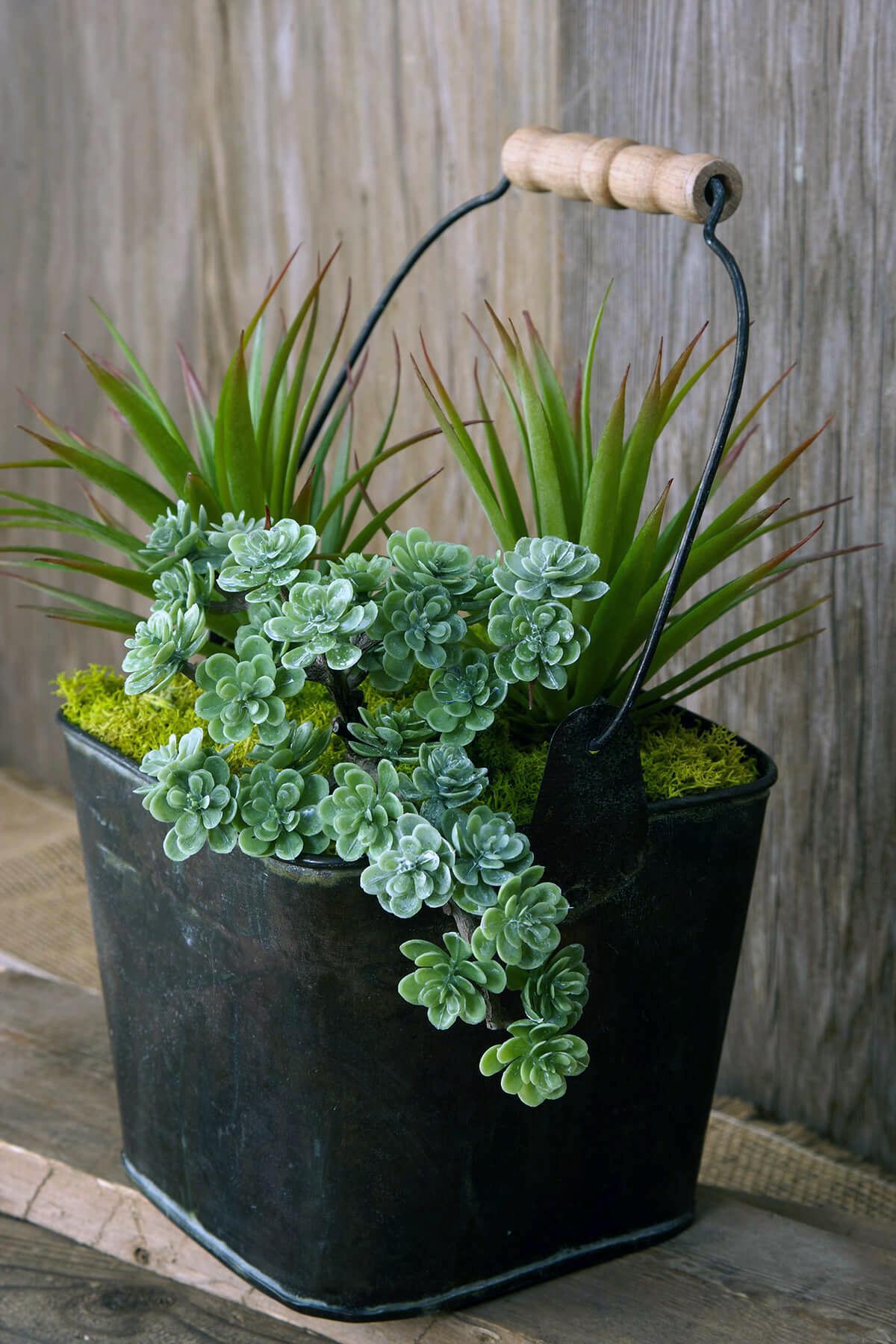 Sedum Succulent Pick
