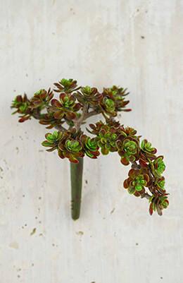 "Sedum Succulent Floral Pick  Burgundy 5"" x 6.5"""