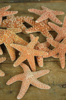 Sugar Starfish 3-4in (Pack of 12)