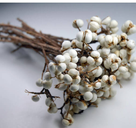 Preserved Texas Tallow Berries 20 Stems