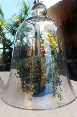 Thick Glass Bell Jar 11-1/2""