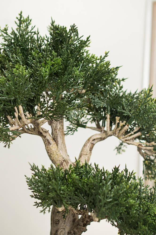 Cedar Bonsai Tree 15in