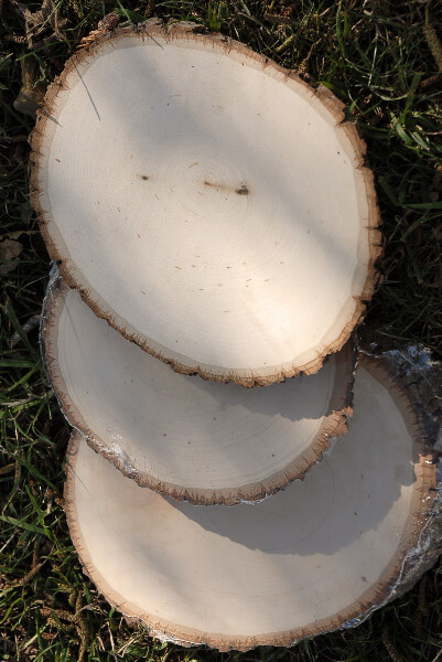 Basswood Round Tree Slice Medium