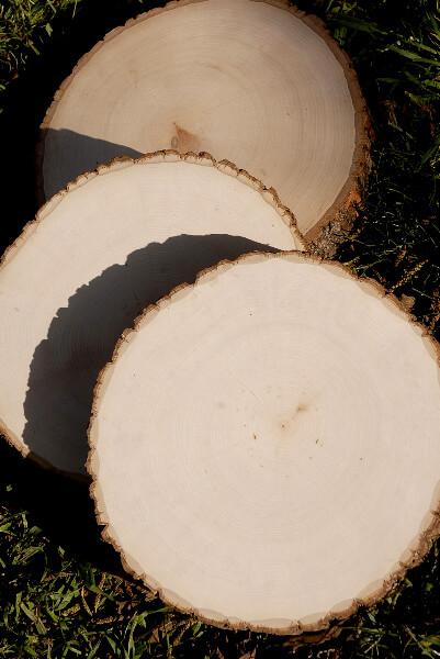 Tree Slices Round 9-12in Bark Edges Basswood