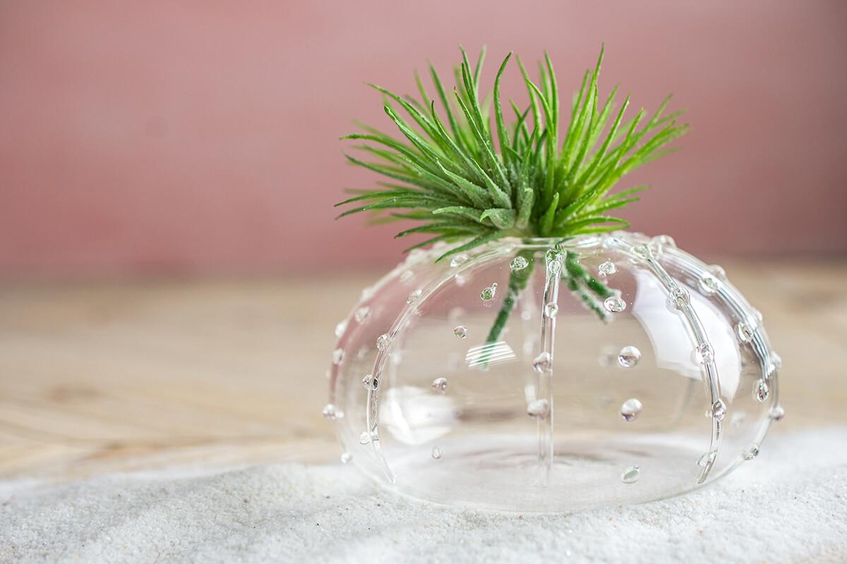 "Sea Urchin Budvase 4"""