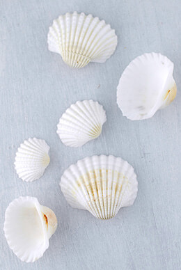 White Clam Shells 3 lb.