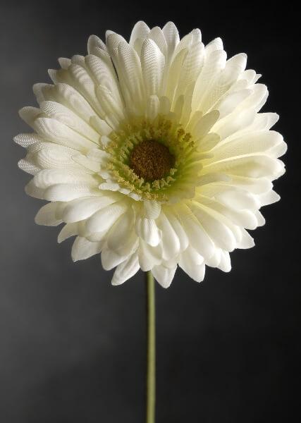 White Daisies Gerbera Silk 12 Flowers