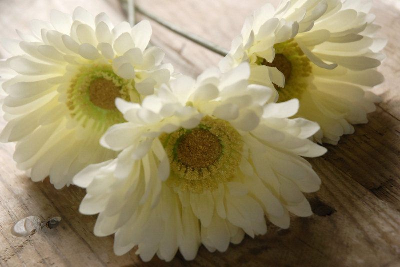 One Dozen White Gerbera Daisies