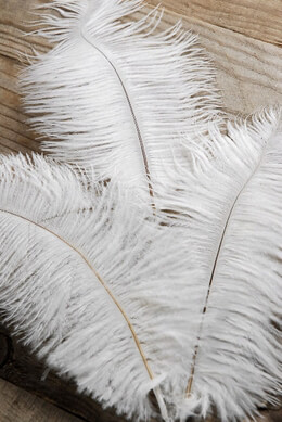 3 White Ostrich Feathers on Wire Stem 9in