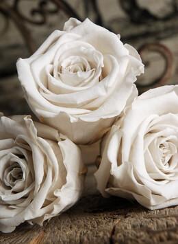 6 White 2.5in Preserved Roses
