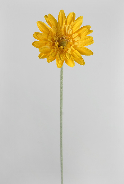24 Royal Yellow Gerbera Daisy Sprays
